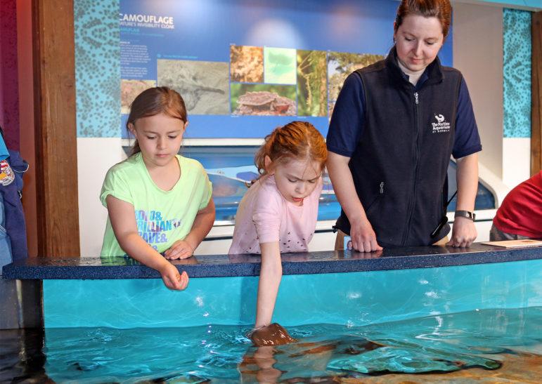 Feeding Rays Maritime Aquarium April Camp