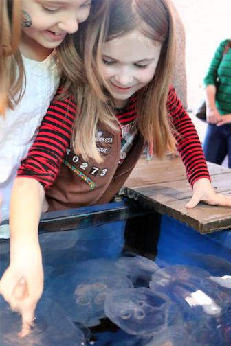 Girl Scouts Boy Scouts Maritime Aquarium 2019