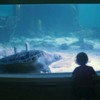 Kid Sea Turtle Maritime Aquarium 2019