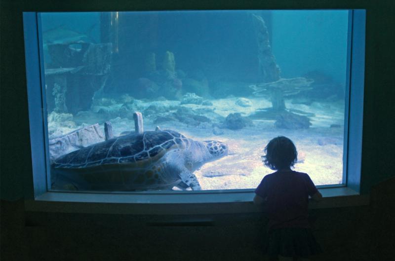 Kid Sea Turtle Maritime Aquarium 2019