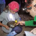 Tagging Horseshoe Crabs Maritime Aquarium 2019