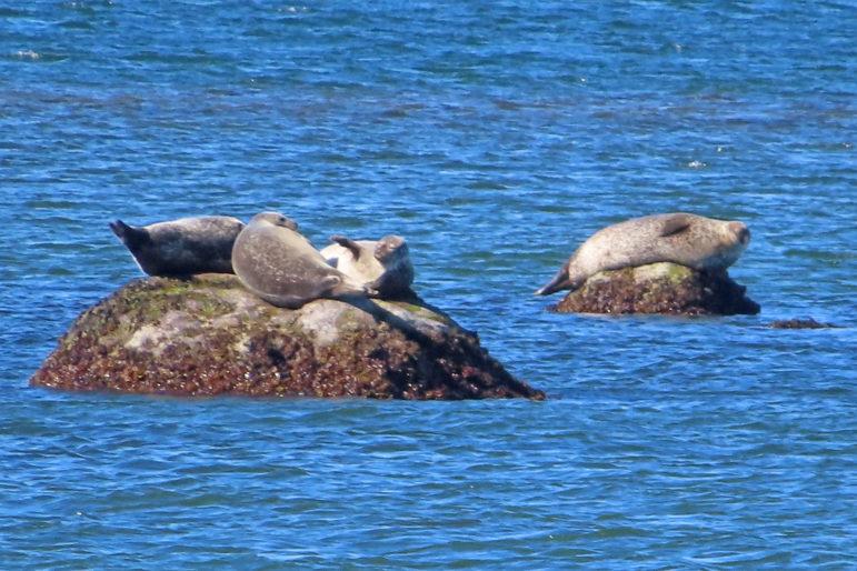 Seal Spotting and Bird Cruises Maritime Aquarium