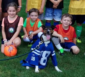 Dog mascot Darien park and rec soccer all stars program