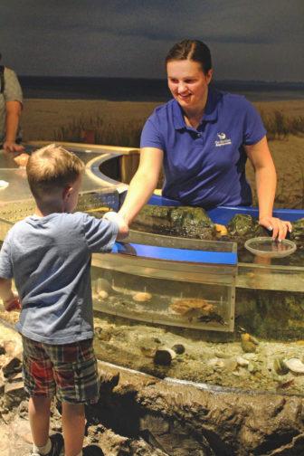 Register to Volunteer at Maritime Aquarium 2019