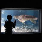 Maritime Aquarium kid tank