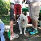 2019 Yappy Hour Bartlett Arboretum