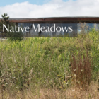 Restoring Native Meadows at Grace Farms