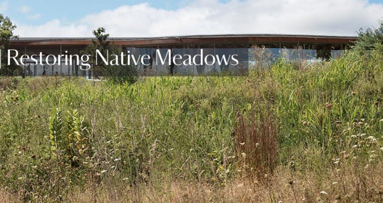 Restoring Native Meadows at Grace Farms
