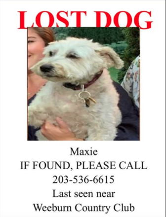 Maxie lost dog