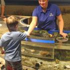 Volunteer Touch Tank Maritime Aquarium