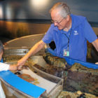 Touch Tank Volunteer Maritime Aquarium