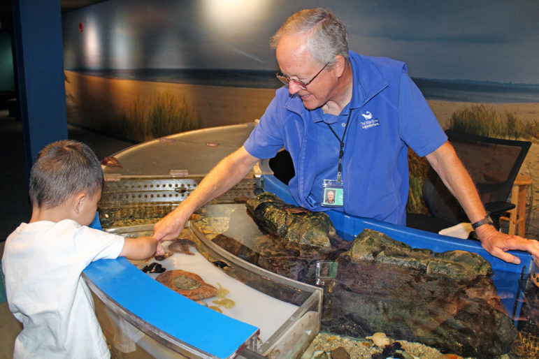 Touch Tank Volunteer Maritime Aquarium