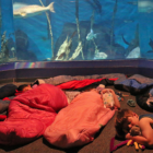 Family sleepover Sleep with the Fishes Maritime Aquarium