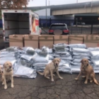 pot haul state police October 2019