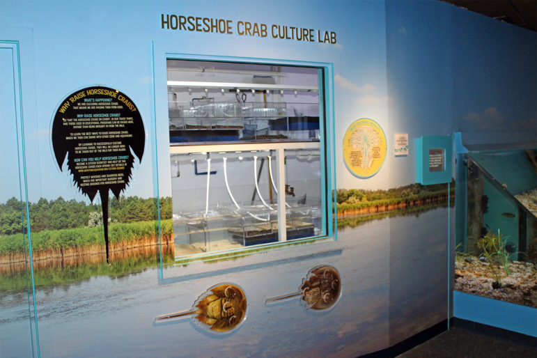 Horseshoe Crab Culture Lab