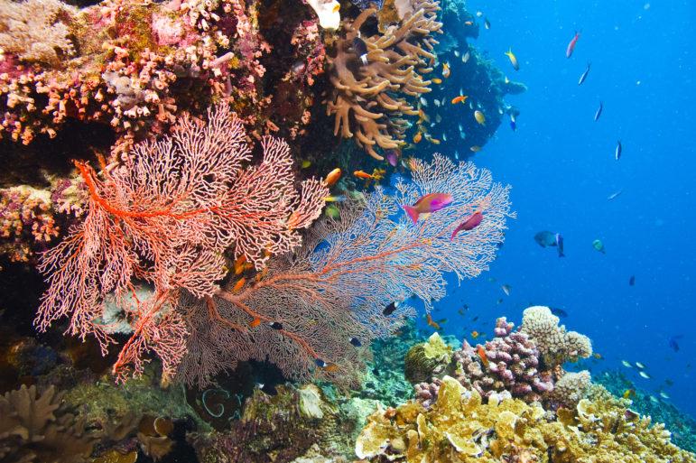 Coral Great Barrier Reef IMAX aquarium