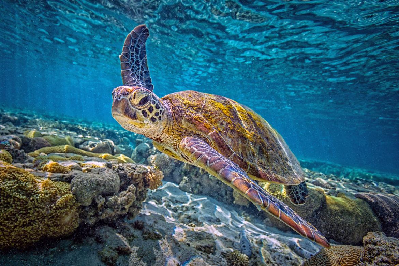 Great Barrier Reef green sea turtle IMAX aquarium 2019