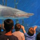Shark Aquarium Drop n Shop