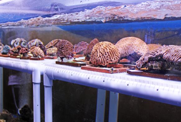 Corals Maritime Aquarium exhibit