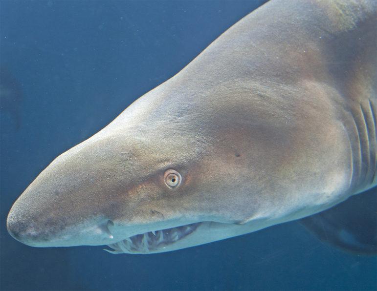 Shark Maritime Aquarium