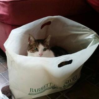 Cat in a Barrett Bookstore Bag