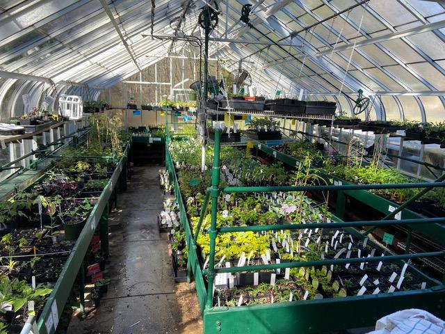 DCA Greenhouse Gardening