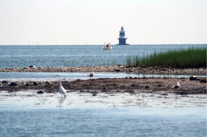 Lighthouse bird coast beach