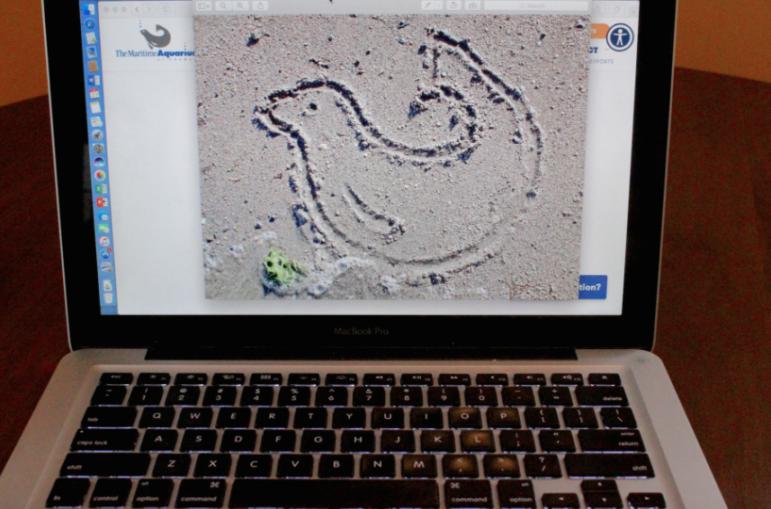 Laptop Seal in Sand Maritime Aquarium
