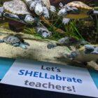 Maritime Aquarium teacher appreciation week