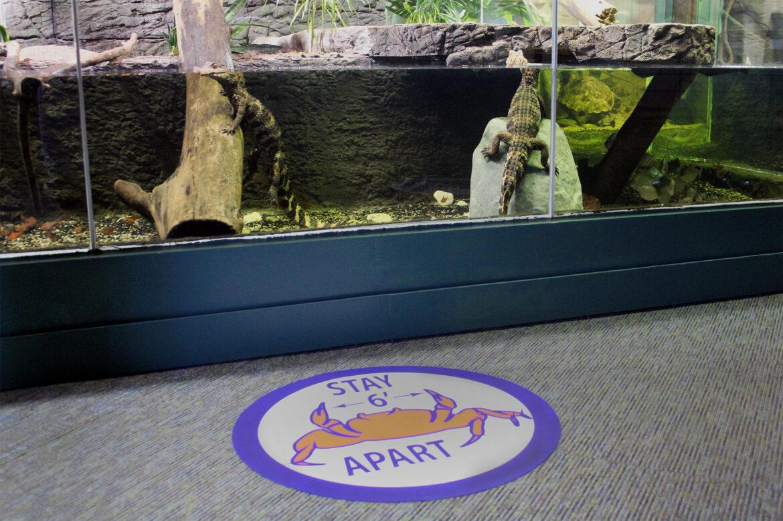 Aquarium denizens await visitors COVID-19 reopening June 2020
