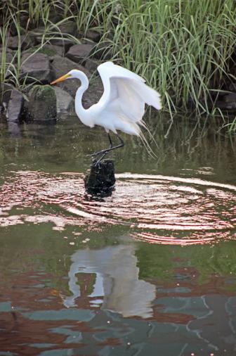 Great Egret Maritime Aquarium