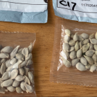 Unsolicited seeds, apparently from China 2020