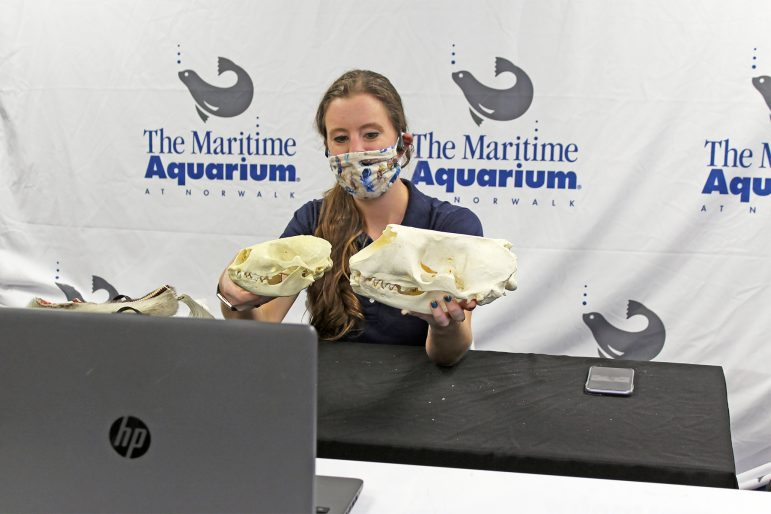 Maritime Aquarium school programming online skulls