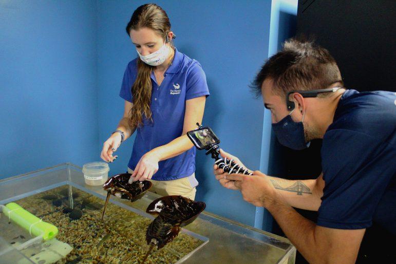 Maritime Aquarium virtual programs for Darien schools