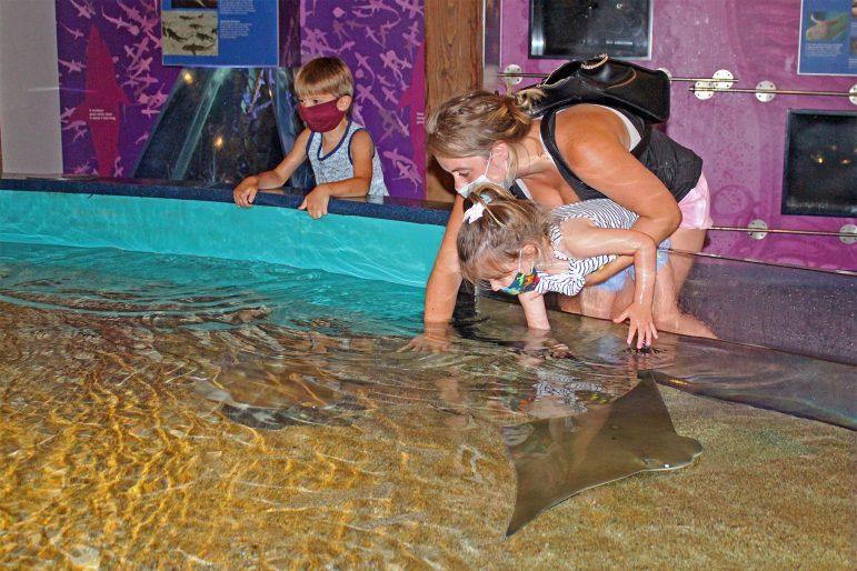 Aquarium Free for Essential Workers