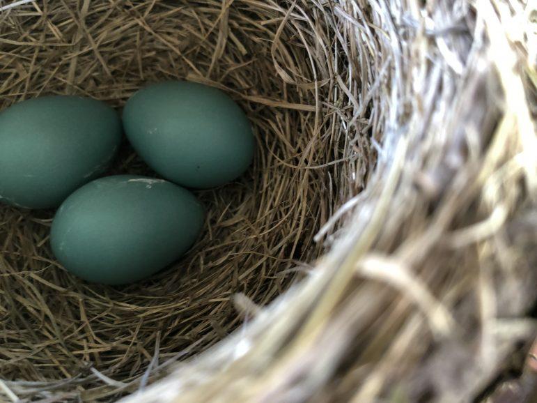 Robin Egg by Myla Thomas