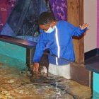 Maritime Aquarium kid touch tank