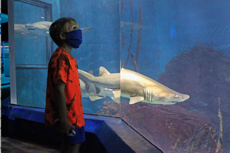 Masked at Maritime Aquarium COVID-19