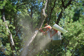 Eversource tree trimming