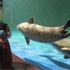 Sensory Friendly Evening Maritime Aquarium
