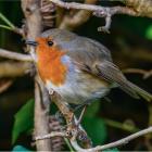 Backyard birding image from Darien Library website