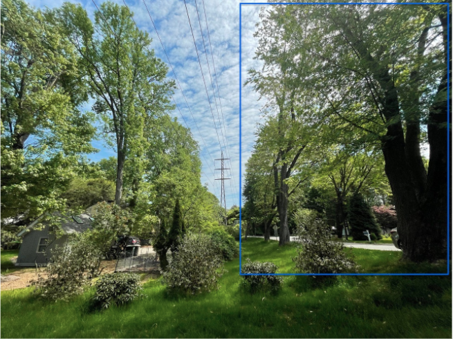 Little Brook Road tree removal
